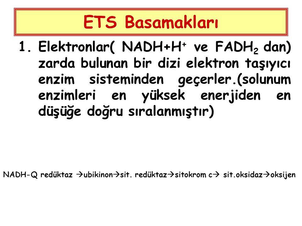 ETS Basamakları