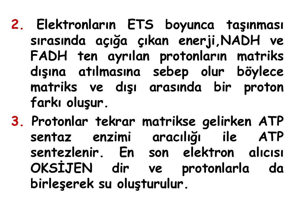 2. Elektronların ETS boyunca taşınması sırasında açığa çıkan enerji,NADH ve FADH ten ayrılan protonların matriks dışına atılmasına sebep olur böylece matriks ve dışı arasında bir proton farkı oluşur.