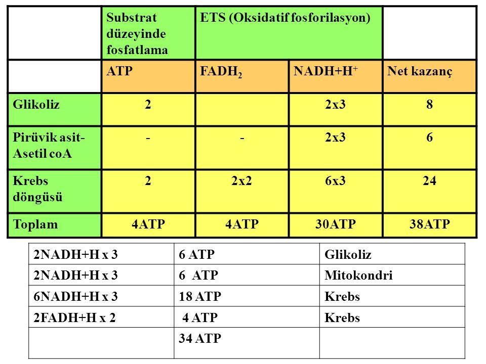 Substrat düzeyinde. fosfatlama. ETS (Oksidatif fosforilasyon) ATP. FADH2. NADH+H+ Net kazanç.