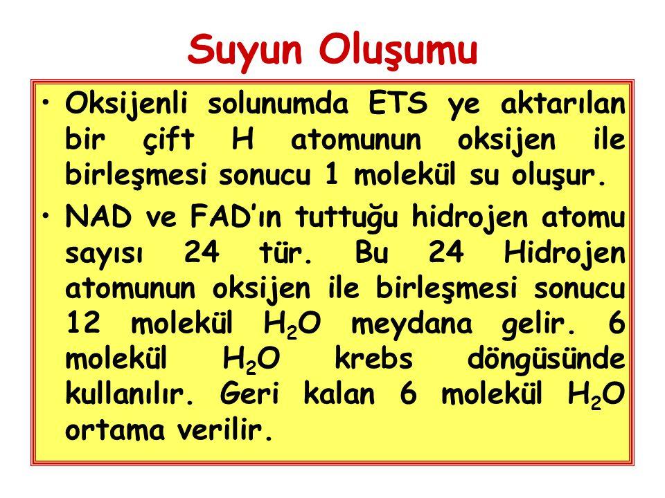 Suyun Oluşumu Oksijenli solunumda ETS ye aktarılan bir çift H atomunun oksijen ile birleşmesi sonucu 1 molekül su oluşur.