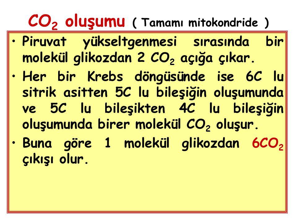 CO2 oluşumu ( Tamamı mitokondride )