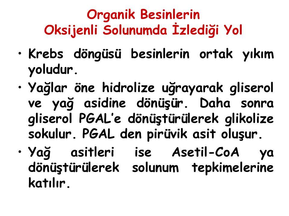 Organik Besinlerin Oksijenli Solunumda İzlediği Yol