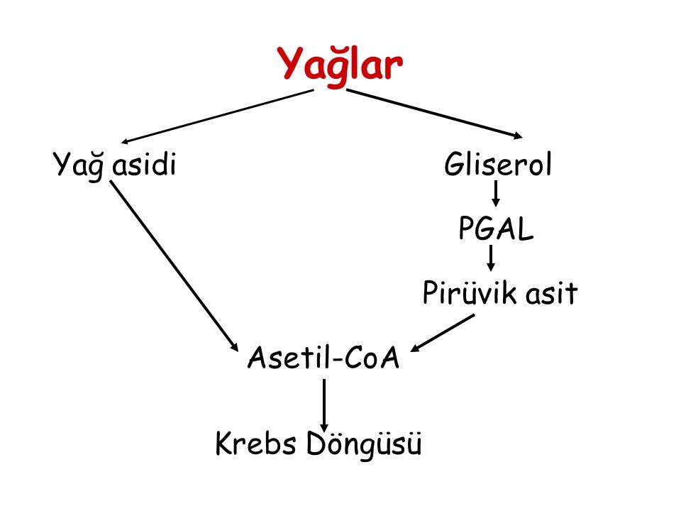 Yağlar Yağ asidi Gliserol PGAL Pirüvik asit Asetil-CoA Krebs Döngüsü