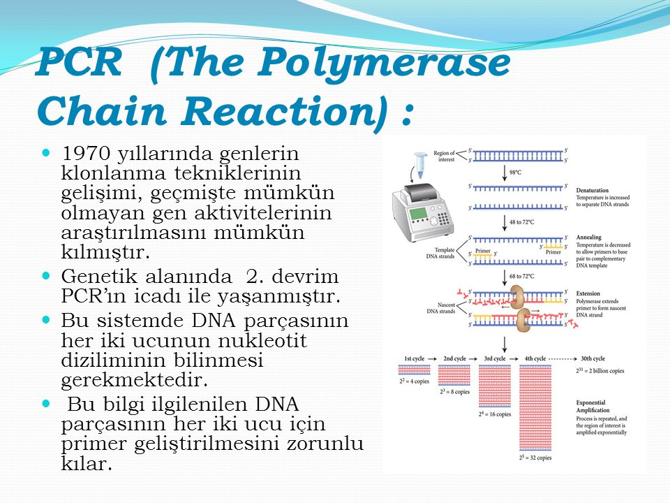 PCR (The Polymerase Chain Reaction) :
