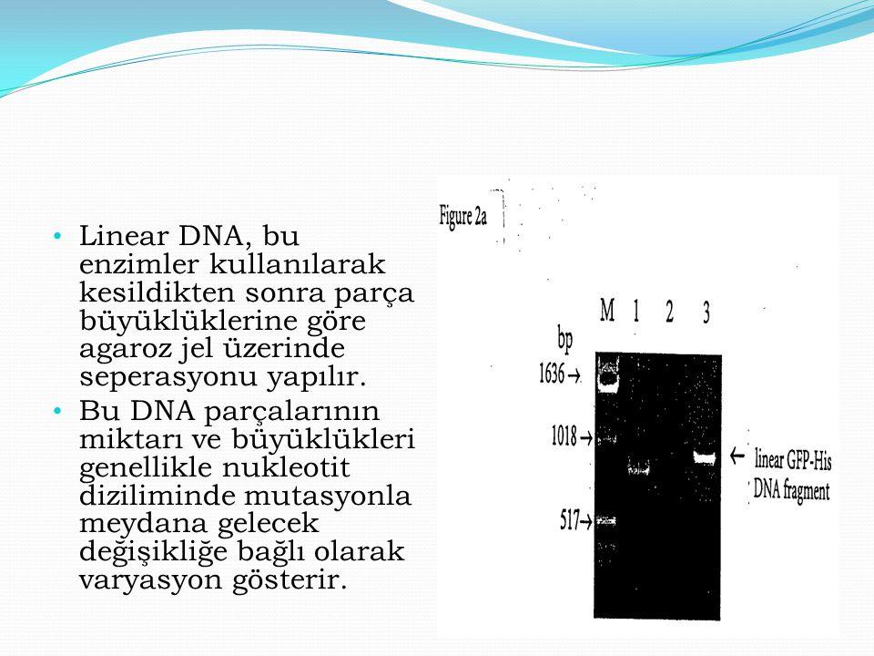 Linear DNA, bu enzimler kullanılarak kesildikten sonra parça büyüklüklerine göre agaroz jel üzerinde seperasyonu yapılır.