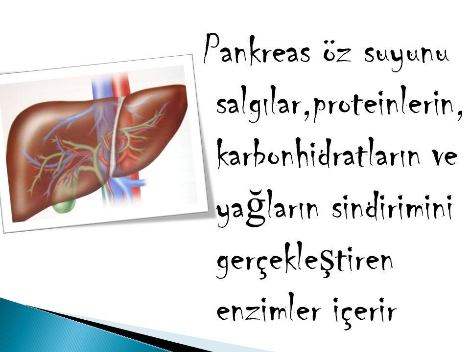 Pankreas öz suyunu salgılar,proteinlerin, karbonhidratların ve yağların sindirimini gerçekleştiren enzimler içerir