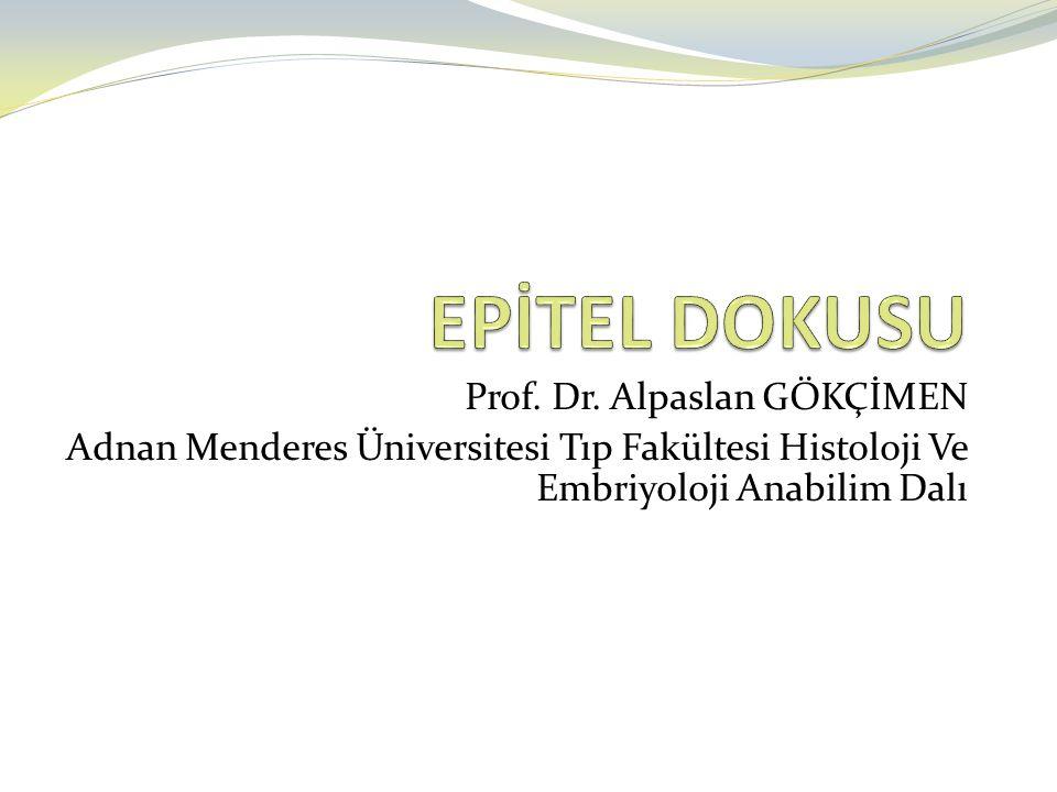 EPİTEL DOKUSU Prof. Dr. Alpaslan GÖKÇİMEN