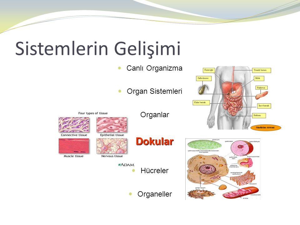 Sistemlerin Gelişimi Dokular Canlı Organizma Organ Sistemleri Organlar