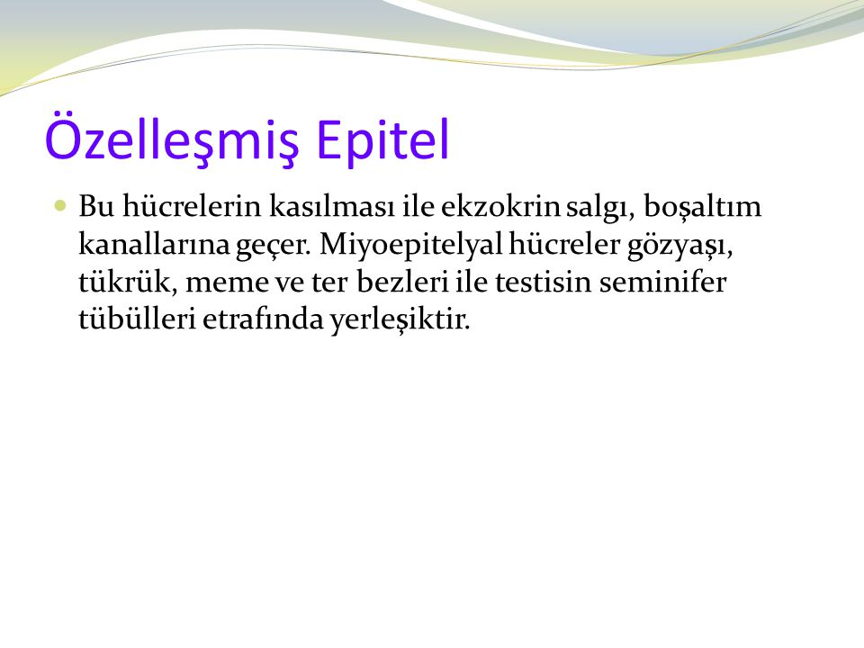 Özelleşmiş Epitel