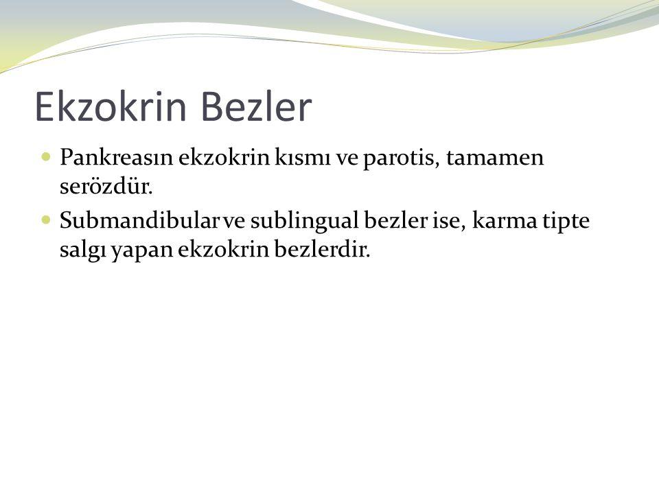 Ekzokrin Bezler Pankreasın ekzokrin kısmı ve parotis, tamamen serözdür.