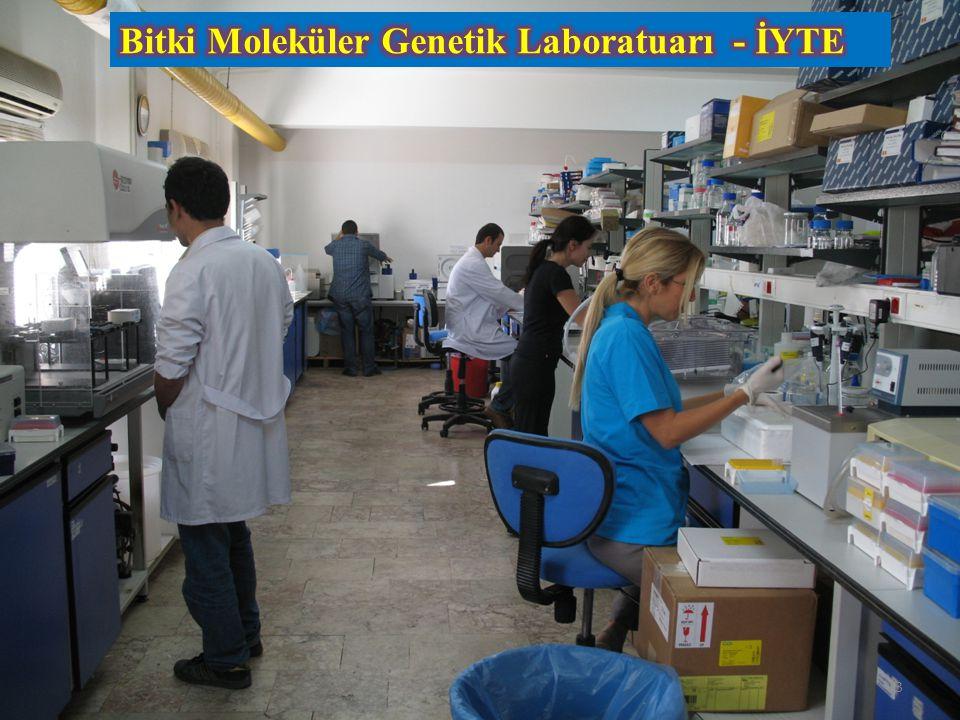 Bitki Moleküler Genetik Laboratuarı - İYTE