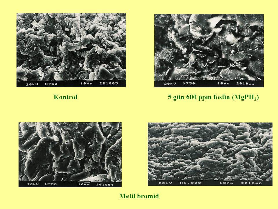 Kontrol 5 gün 600 ppm fosfin (MgPH3) Metil bromid