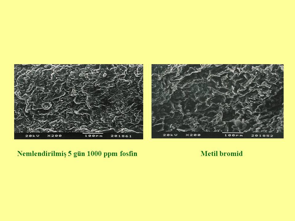Nemlendirilmiş 5 gün 1000 ppm fosfin
