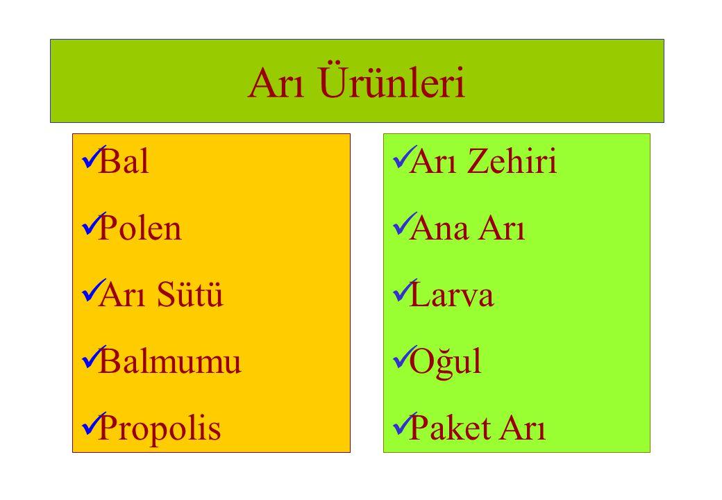 Arı Ürünleri Bal Polen Arı Sütü Balmumu Propolis Arı Zehiri Ana Arı