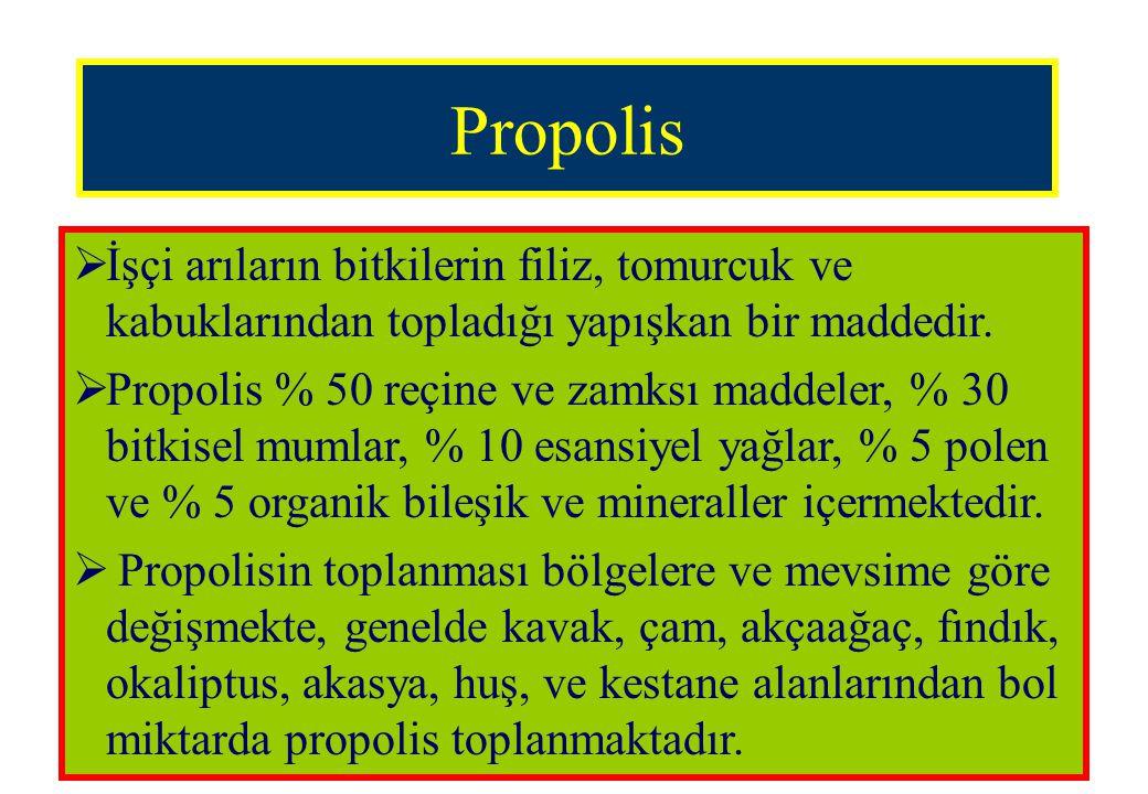 Propolis İşçi arıların bitkilerin filiz, tomurcuk ve kabuklarından topladığı yapışkan bir maddedir.