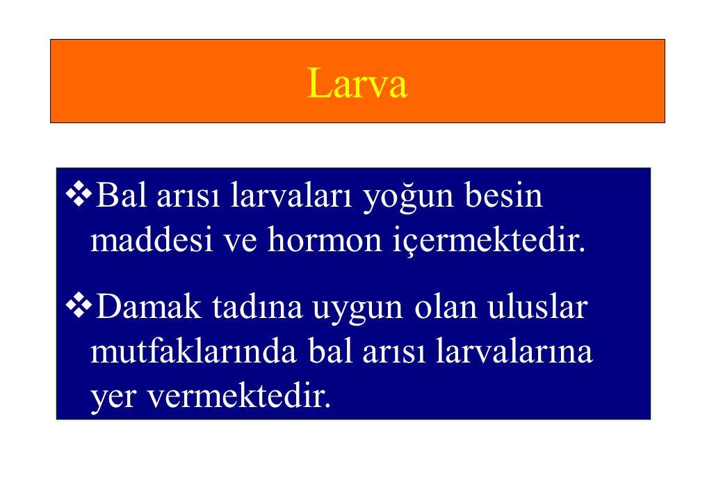 Larva Bal arısı larvaları yoğun besin maddesi ve hormon içermektedir.