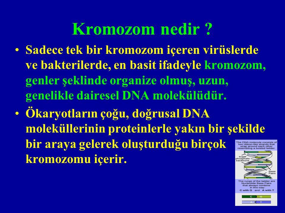 Kromozom nedir
