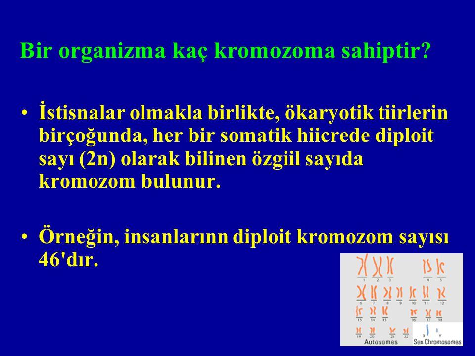 Bir organizma kaç kromozoma sahiptir