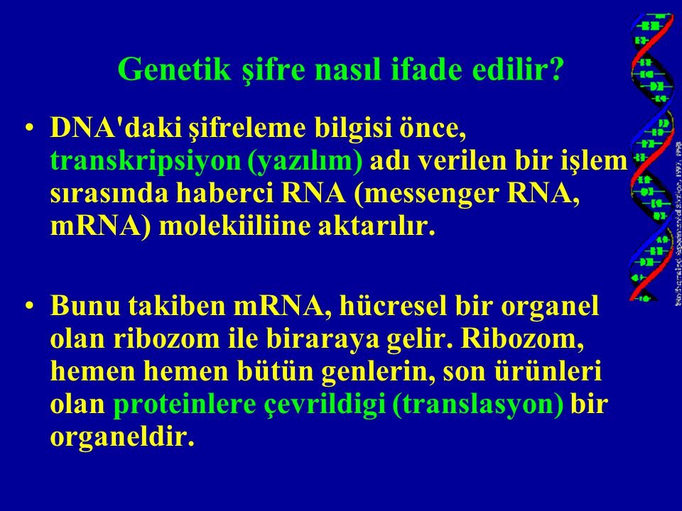 Genetik şifre nasıl ifade edilir