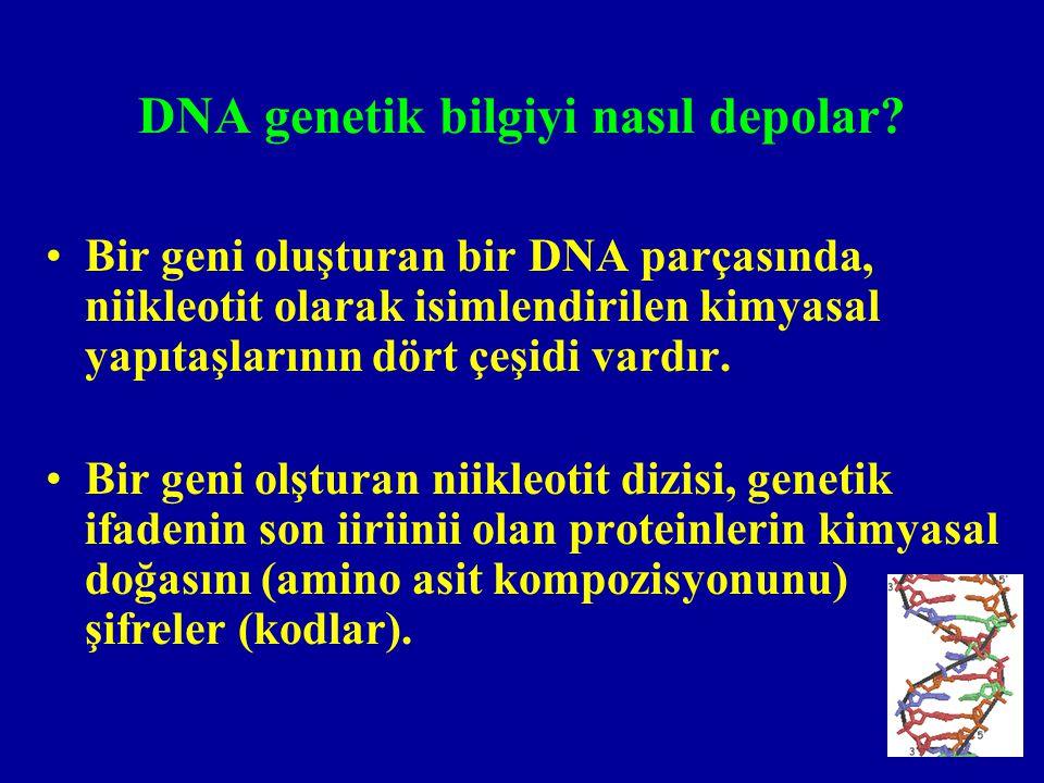 DNA genetik bilgiyi nasıl depolar