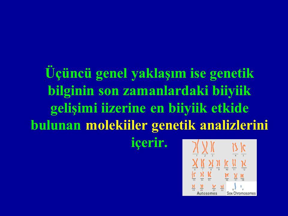 Üçüncü genel yaklaşım ise genetik bilginin son zamanlardaki biiyiik gelişimi iizerine en biiyiik etkide bulunan molekiiler genetik analizlerini içerir.