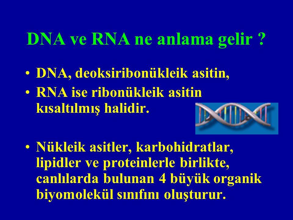 DNA ve RNA ne anlama gelir