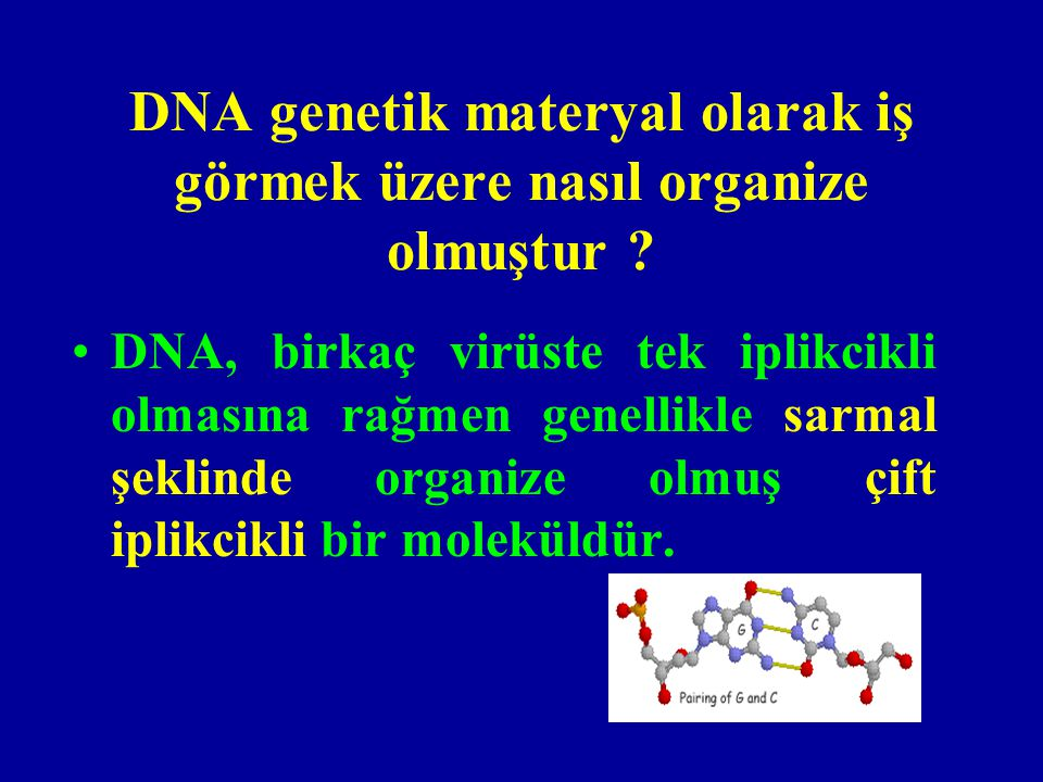 DNA genetik materyal olarak iş görmek üzere nasıl organize olmuştur
