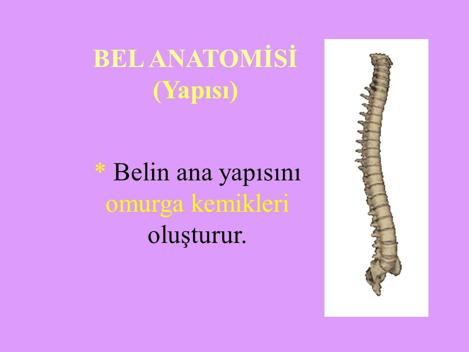 BEL ANATOMİSİ (Yapısı)