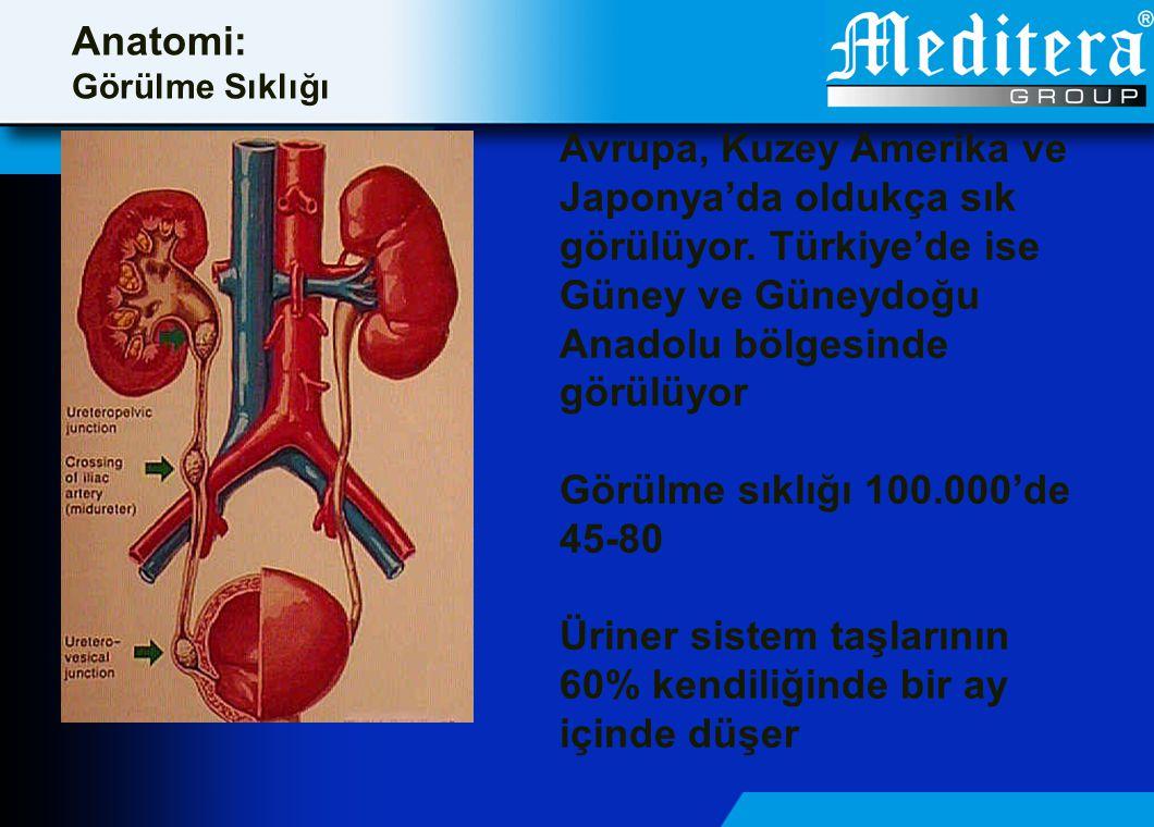 Anatomi: Görülme Sıklığı