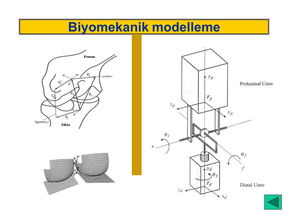 Biyomekanik modelleme