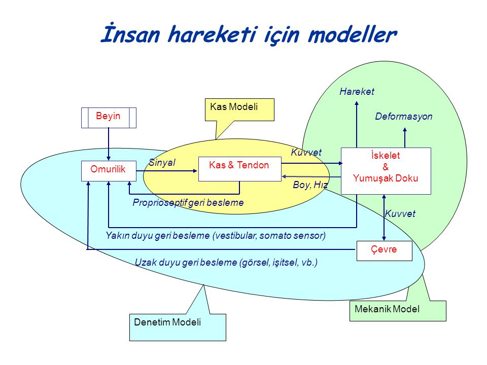 İnsan hareketi için modeller
