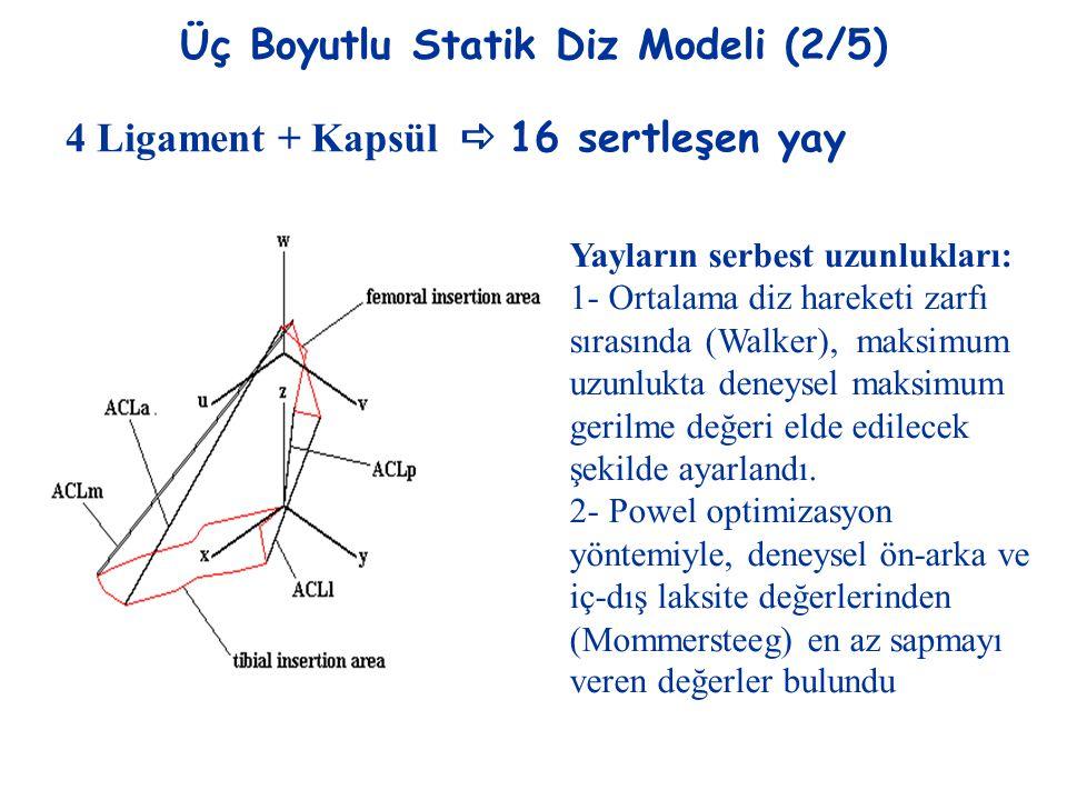 Üç Boyutlu Statik Diz Modeli (2/5)