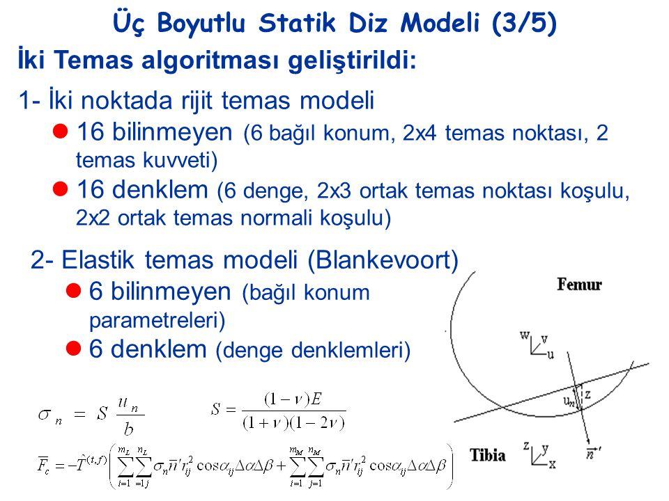 Üç Boyutlu Statik Diz Modeli (3/5)