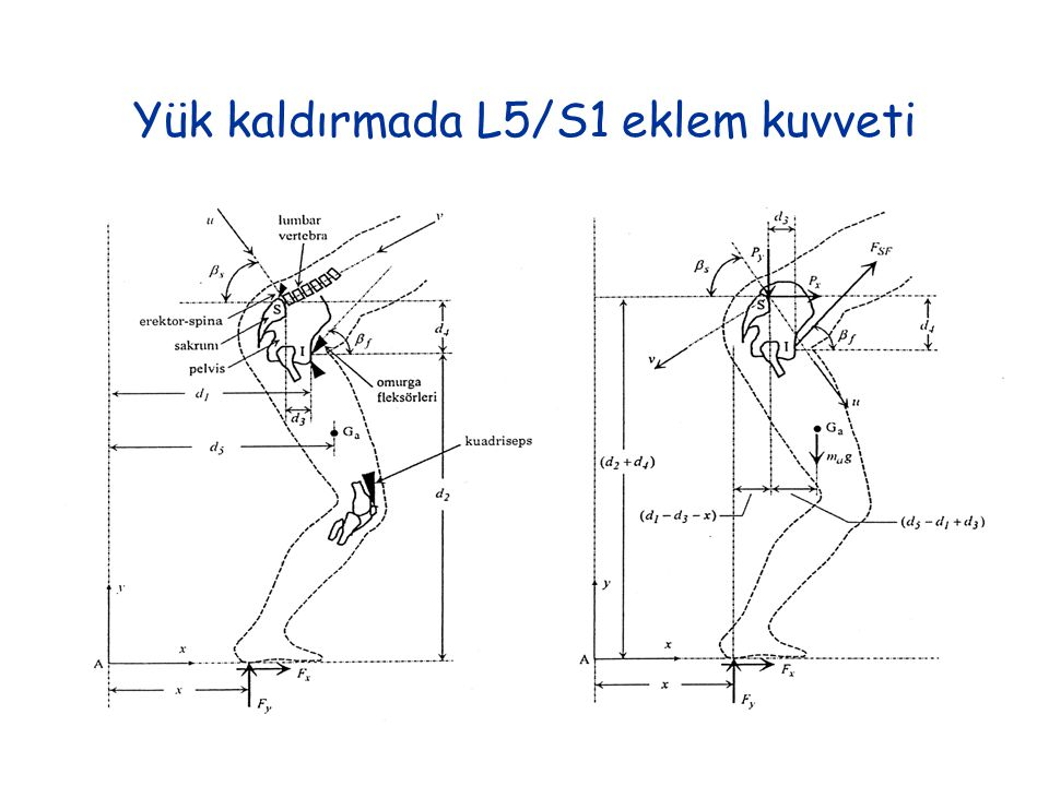 Yük kaldırmada L5/S1 eklem kuvveti