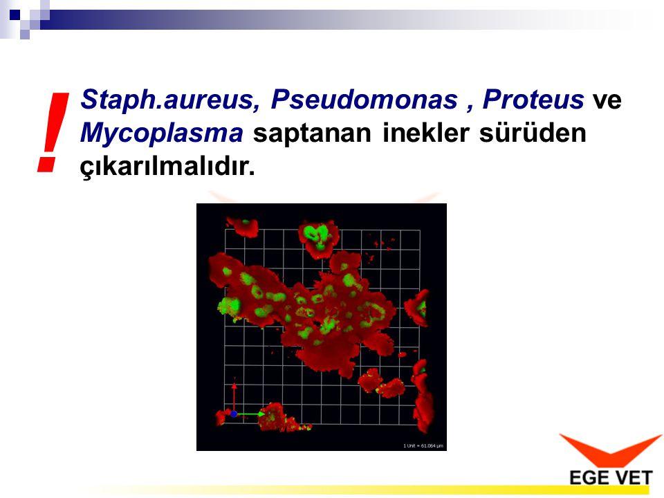 Staph.aureus, Pseudomonas , Proteus ve Mycoplasma saptanan inekler sürüden çıkarılmalıdır.