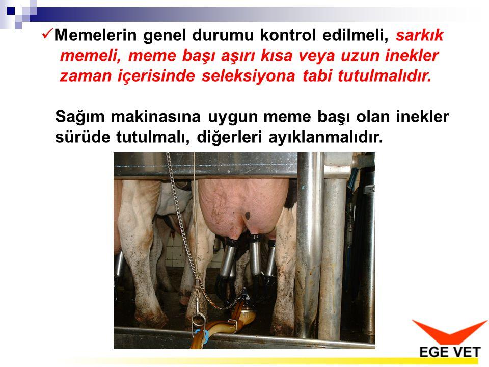 Memelerin genel durumu kontrol edilmeli, sarkık memeli, meme başı aşırı kısa veya uzun inekler zaman içerisinde seleksiyona tabi tutulmalıdır.