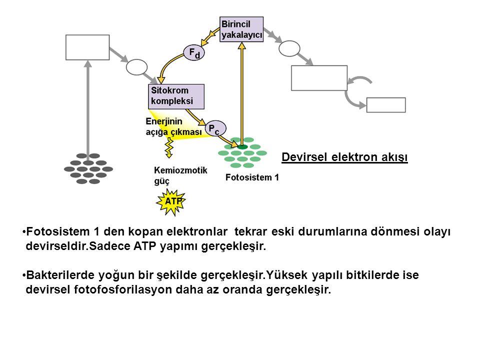Devirsel elektron akışı