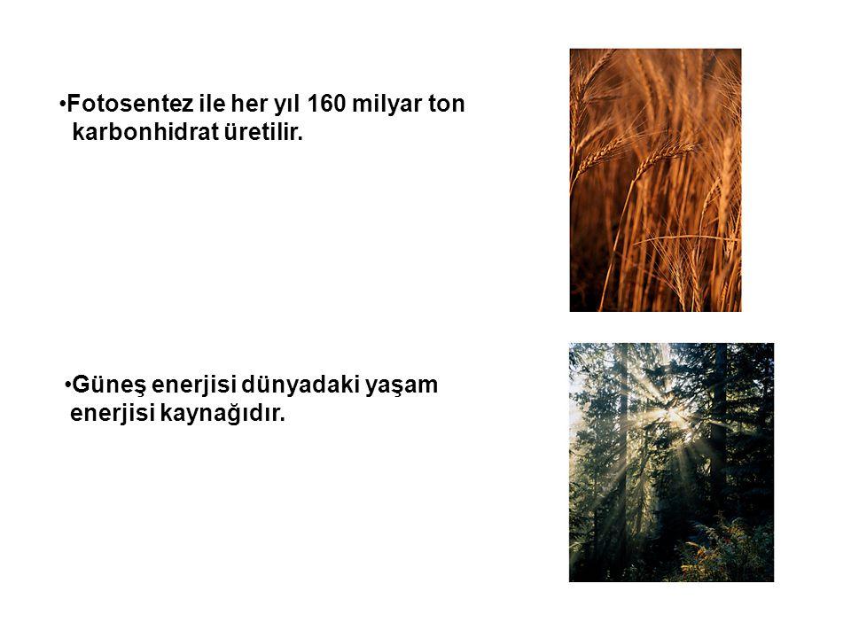 Fotosentez ile her yıl 160 milyar ton