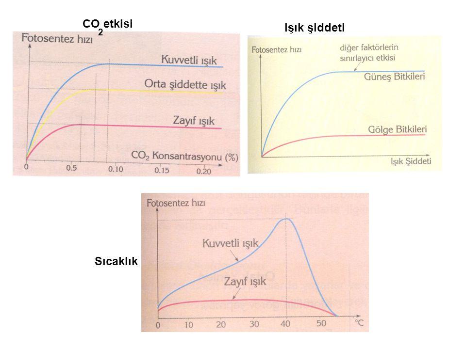 CO etkisi Işık şiddeti 2 Sıcaklık