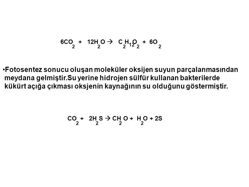 Fotosentez sonucu oluşan moleküler oksijen suyun parçalanmasından