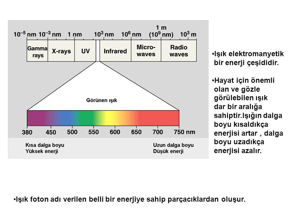 Işık elektromanyetik bir enerji çeşididir. Hayat için önemli. olan ve gözle. görülebilen ışık. dar bir aralığa.