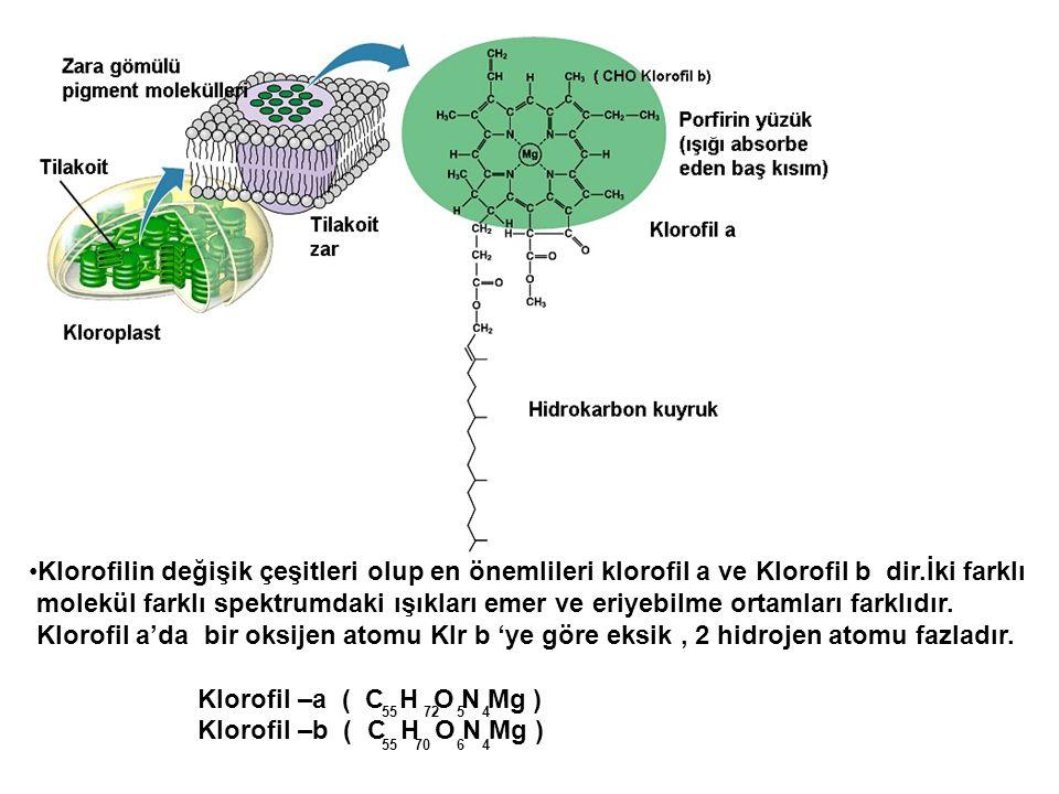 Klorofilin değişik çeşitleri olup en önemlileri klorofil a ve Klorofil b dir.İki farklı