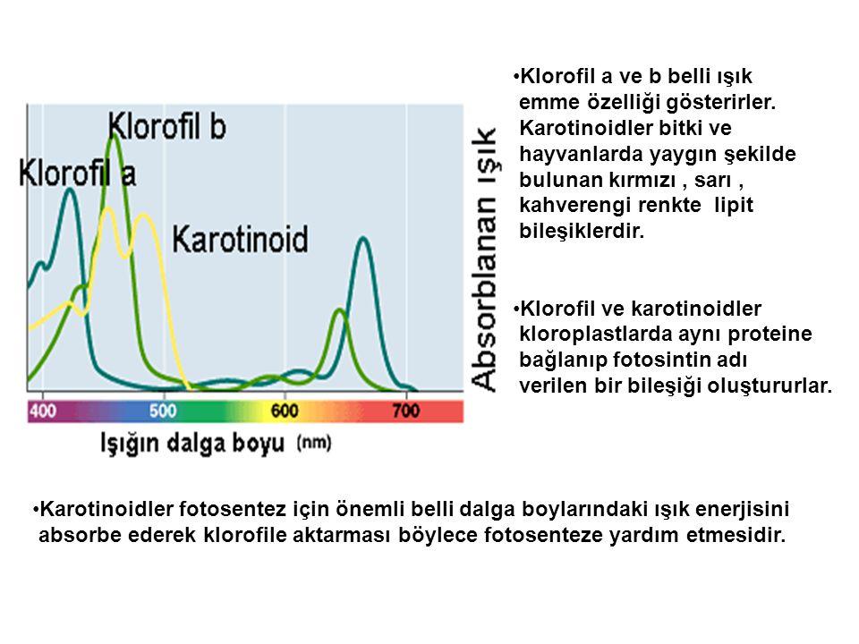 Klorofil a ve b belli ışık