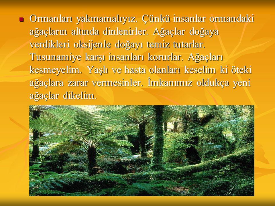 Ormanları yakmamalıyız
