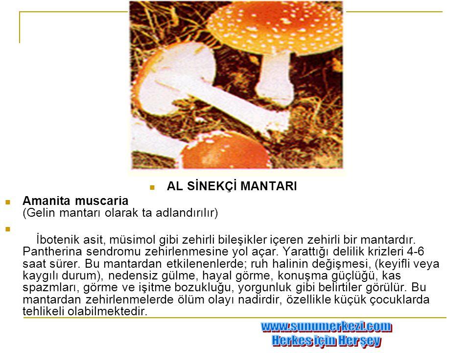www.sunumerkezi.com Herkes için Her şey AL SİNEKÇİ MANTARI