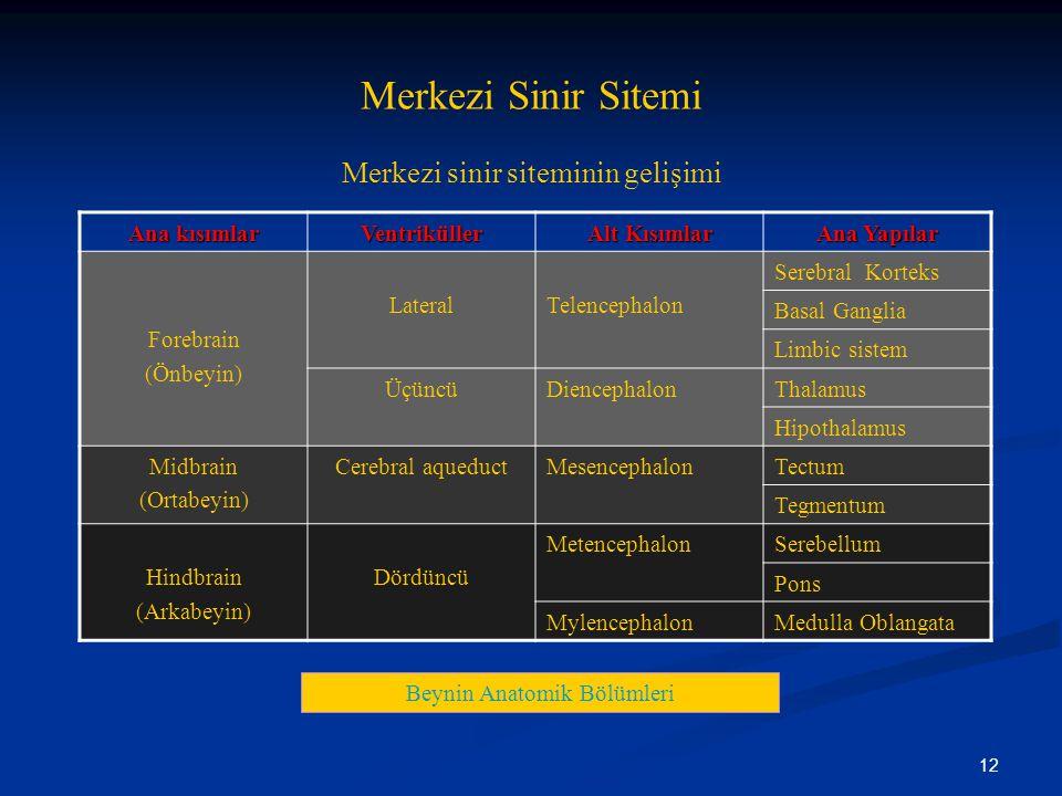 Merkezi Sinir Sitemi Merkezi sinir siteminin gelişimi Ana kısımlar