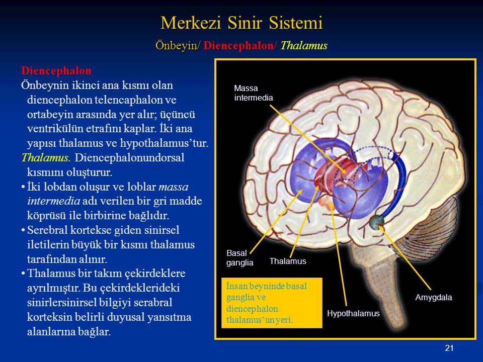 Önbeyin/ Diencephalon/ Thalamus