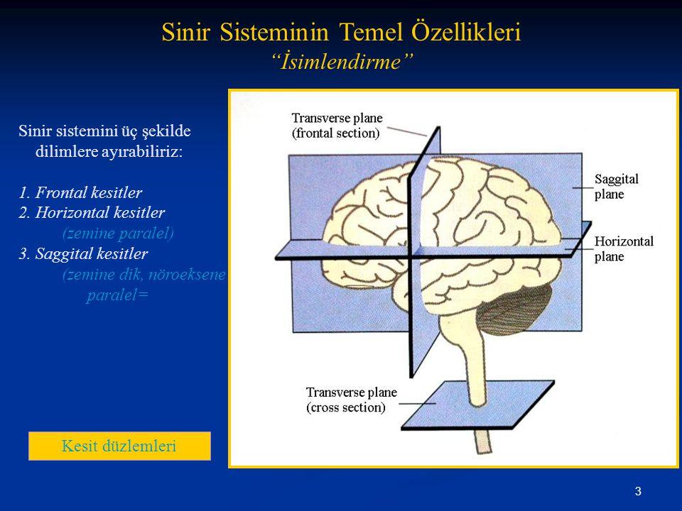 Sinir Sisteminin Temel Özellikleri