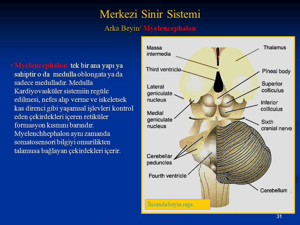 Arka Beyin/ Myelencephalon
