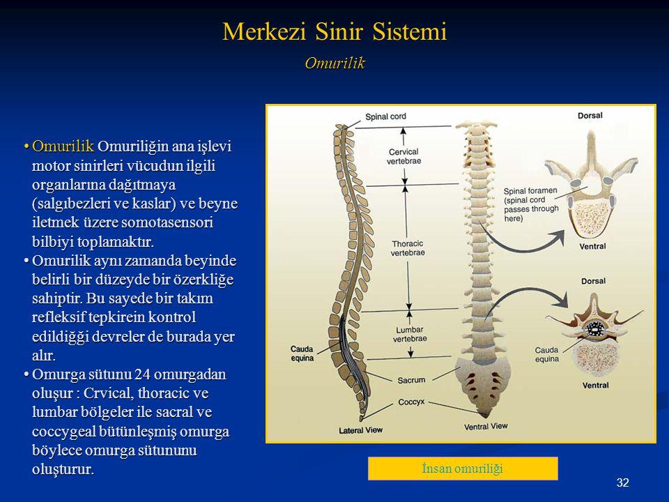 Merkezi Sinir Sistemi Omurilik